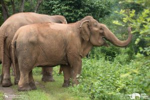 Care for Elephants Herd