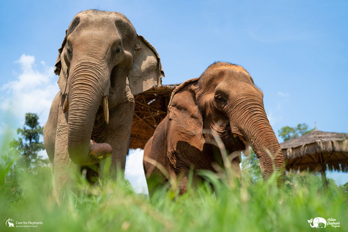Care_for_Elephants_Support_1a