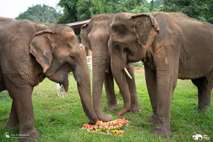 Care_for_Elephants_Support_17