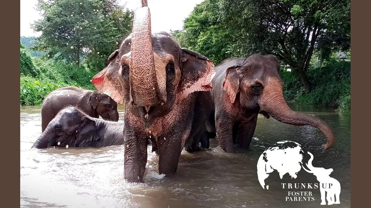 Elephant Freedom Trunks Up