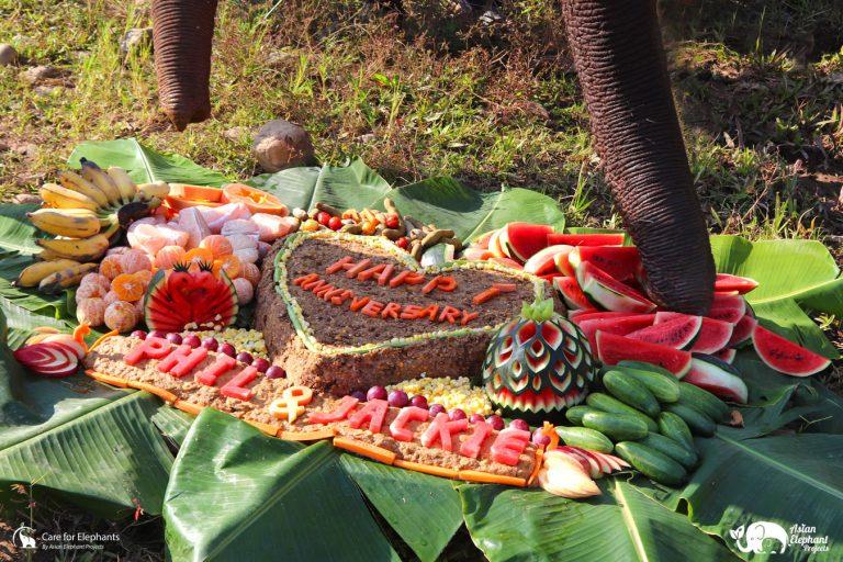 Cake Care for Elephants