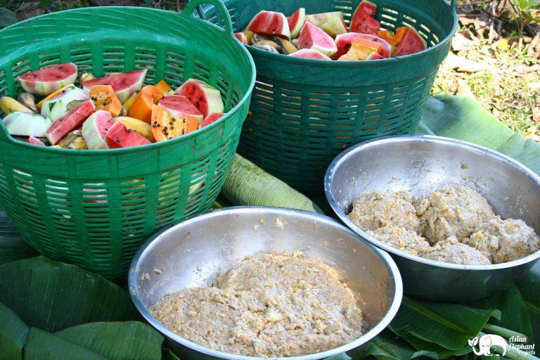 Care for Elephants Baskets of Fruit