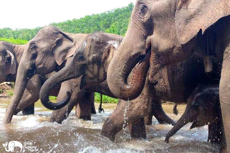 Elephant_Herd_Baan_Huay_Bong_13