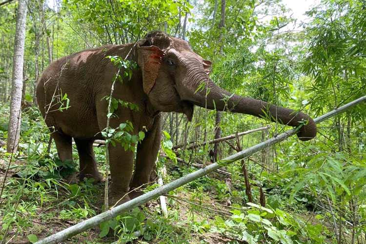 Elephant_Herd_Baan_Huay_Bong_14