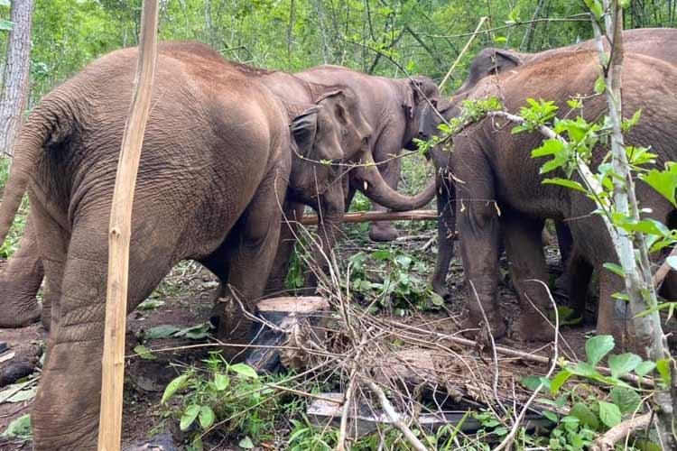 Elephant_Herd_Baan_Huay_Bong_15
