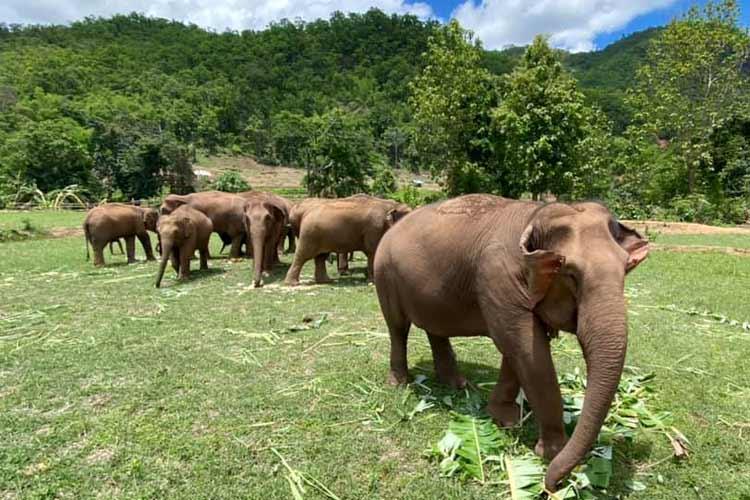 Elephant_Herd_Baan_Huay_Bong_16