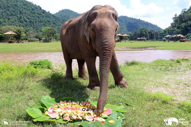 Fruit Cake Sai Thong Happy Birthday