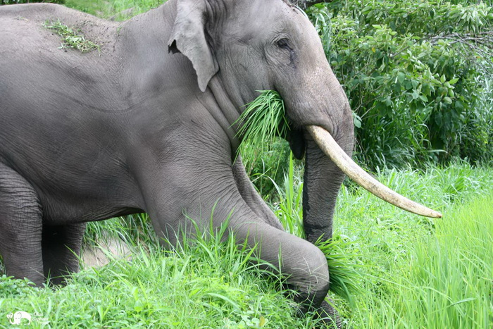 Karen_Elephant_Home_Farming_9