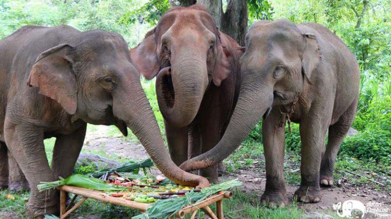 Elephant Pride Fruit Cake
