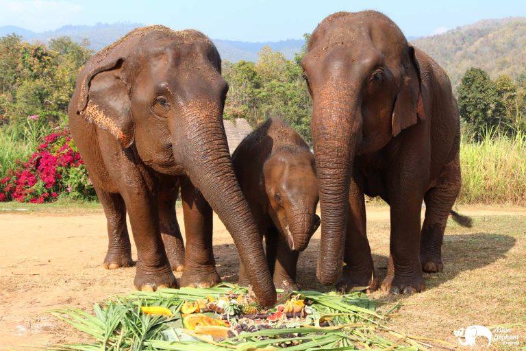 Cakes Karen Elephant Sernity