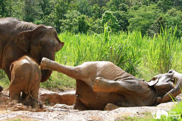 Karen Elephant Serenity Mud Play