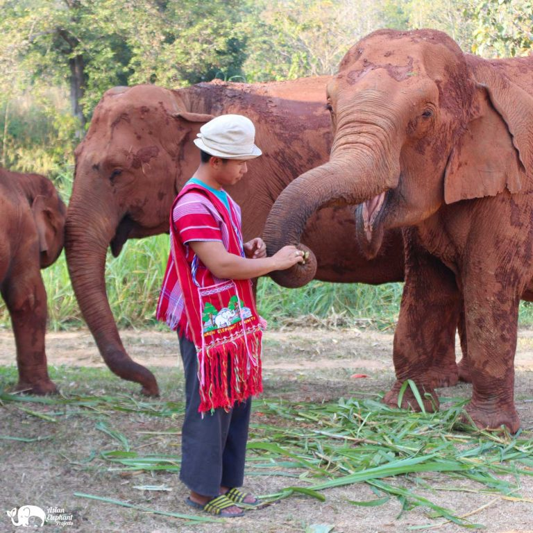 Karen Bags Karen Elephant Serenity