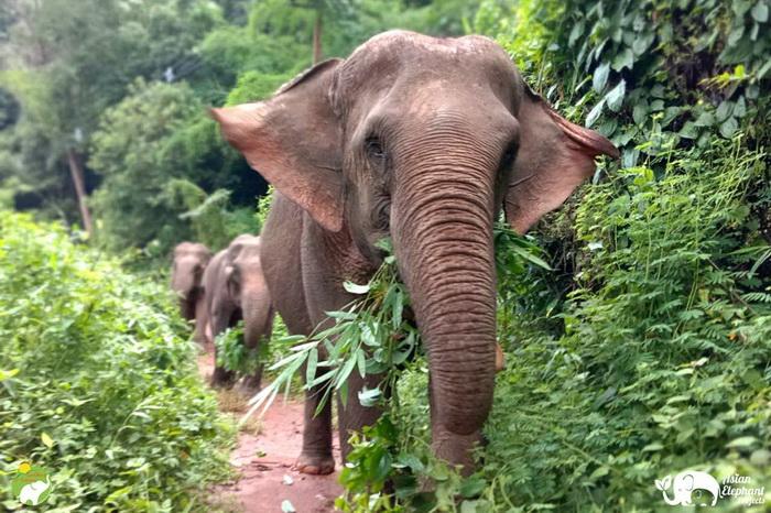 Sunshine_for_Elephants_Herd4a