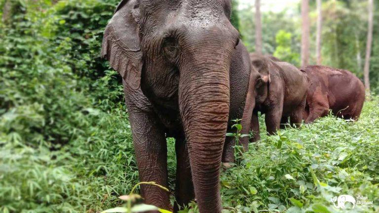 Elephants Sunshine for Elephants