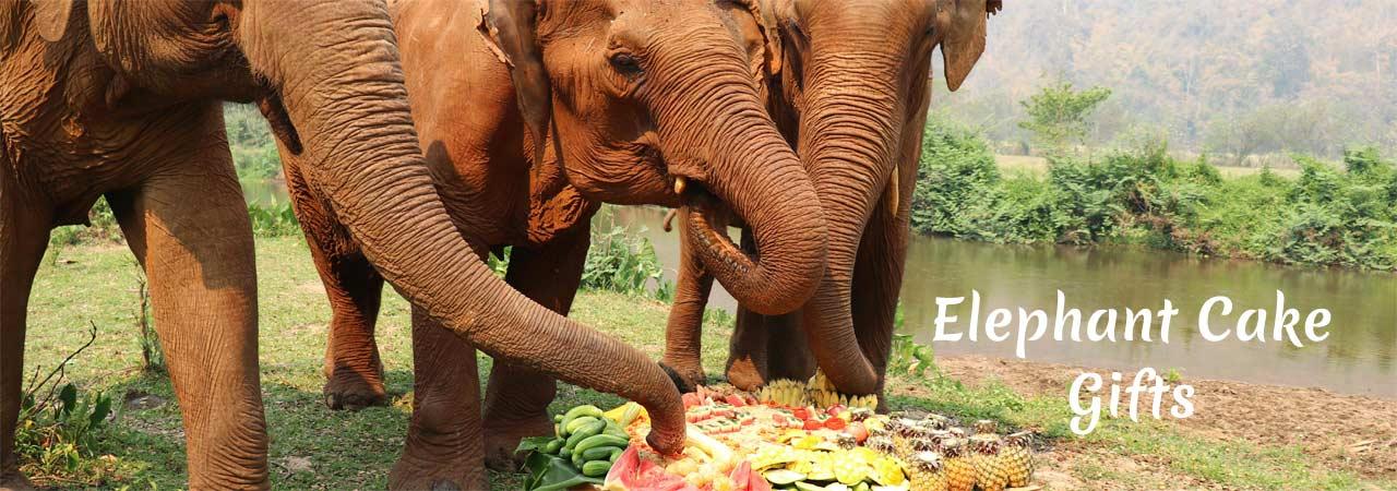 Elephant Fruit Cake Gifts Asian Elephant Projects