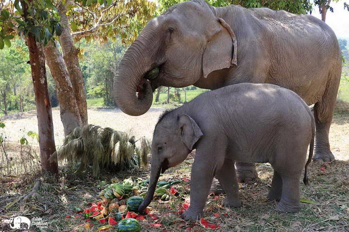 Elephant_Food_ Asian_Elephant_Projects_03