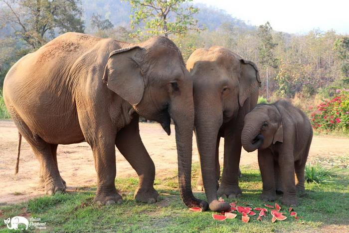 Elephant_Food_ Asian_Elephant_Projects_09