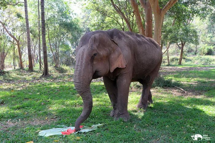 Elephant_Food_ Asian_Elephant_Projects_11