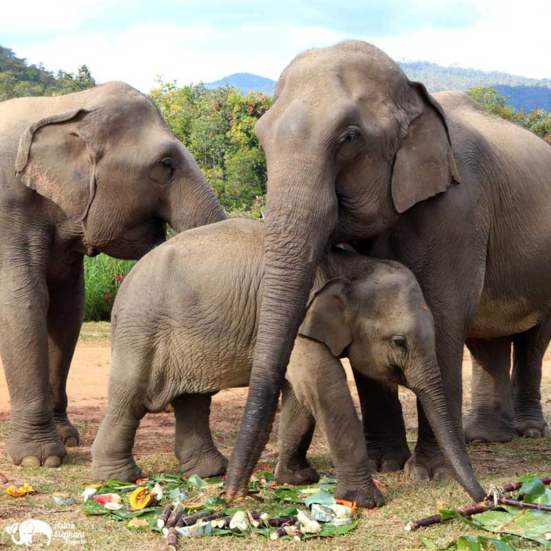 Karen Elephant Serenity Family Enjoy a Cake