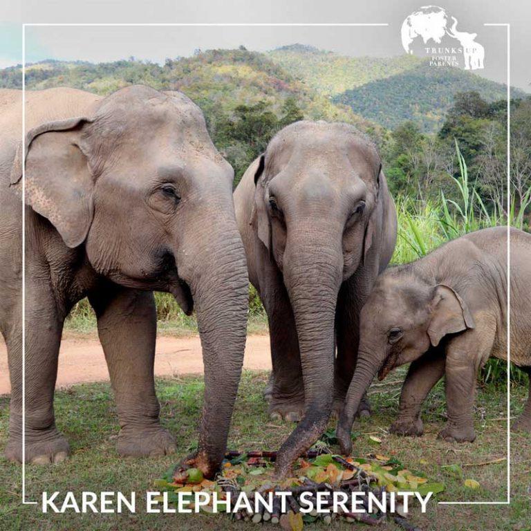 Karen_Elephant_Serenity_TrunksUp