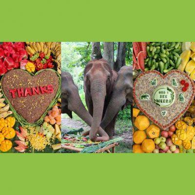 Elephant Cake Gifts