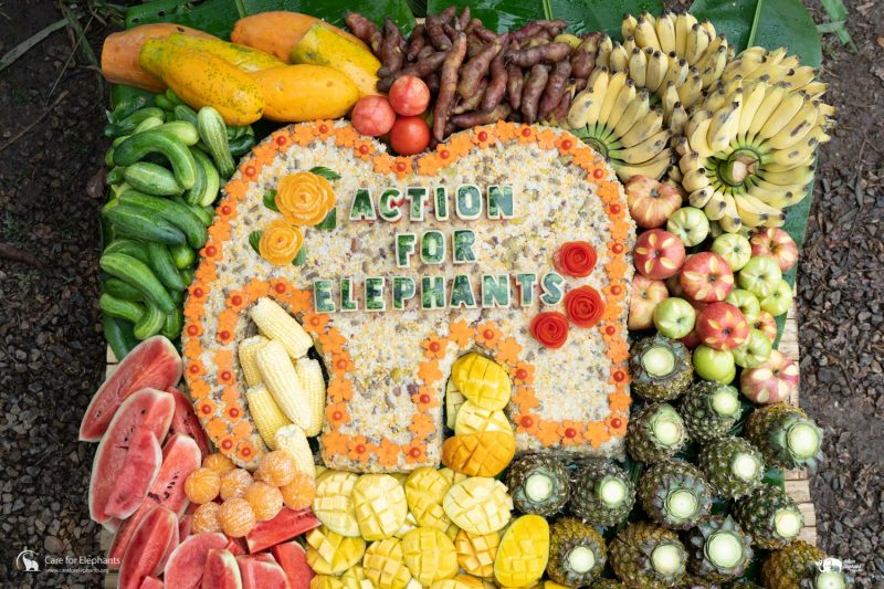 Gourmet Action for Elephants Cake from Care for Elephants