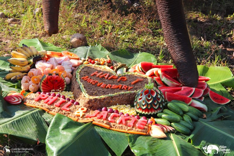 Gourmet Elephant Cake from Care for Elephants