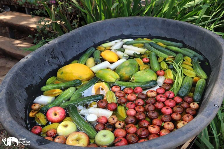 Fruit Vegetables for the elephants Care for Elephants