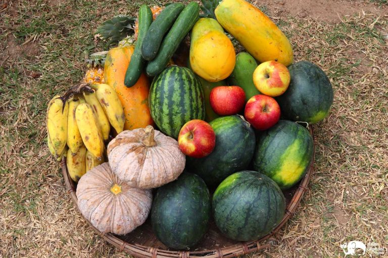 Fruit Vegetables for the elephants Asian Elephant Projects