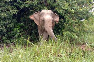 Elephants Cambodia Wildlife Sanctuary