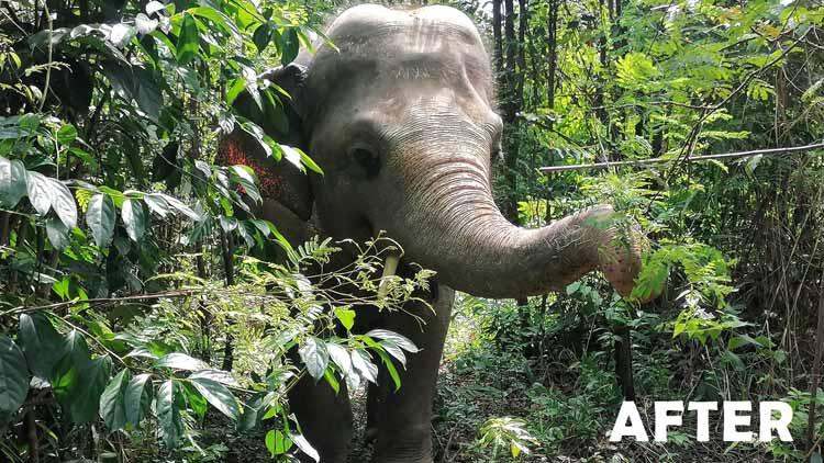 Kaavan in his Jungle Home
