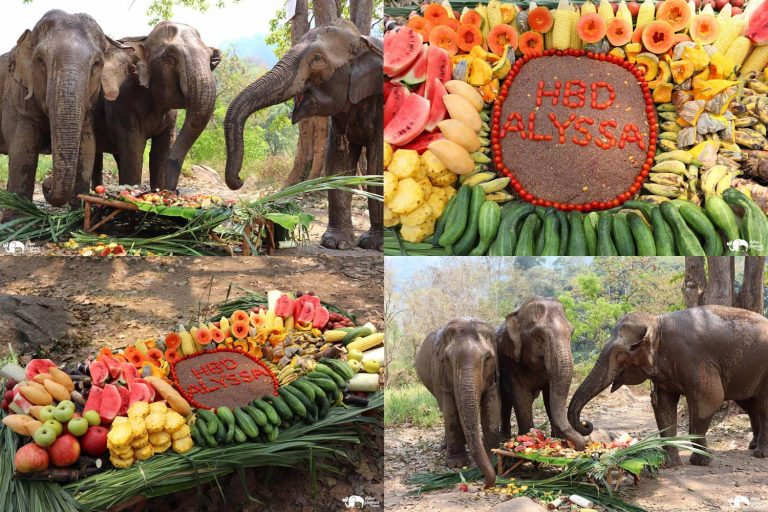 Making_Elephant_Fruit_Cakes_11
