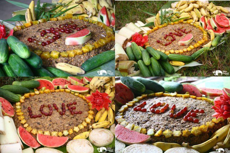 Making_Elephant_Fruit_Cakes_18