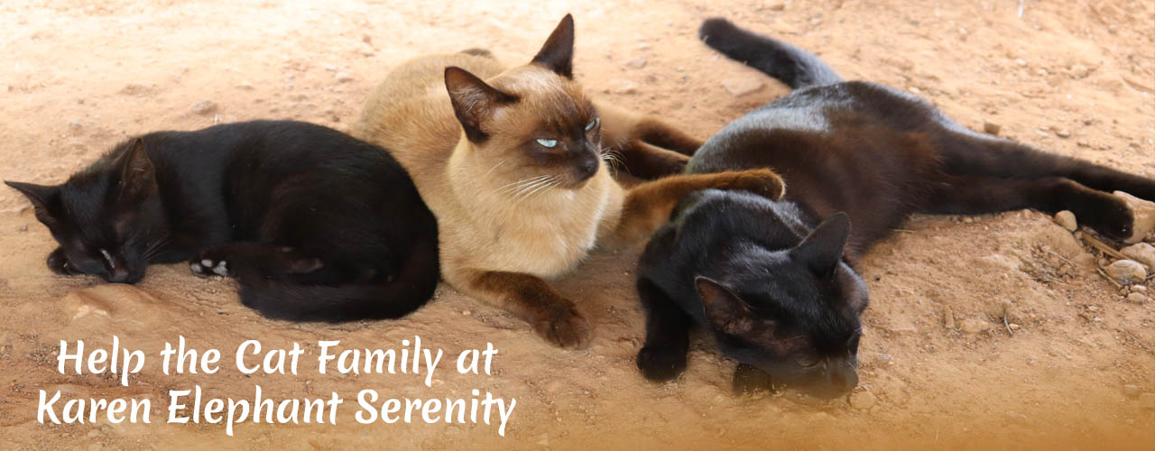 Support Cat Family