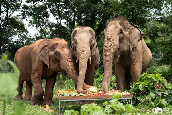 Elephant_Food_AsianElephantProjects_02