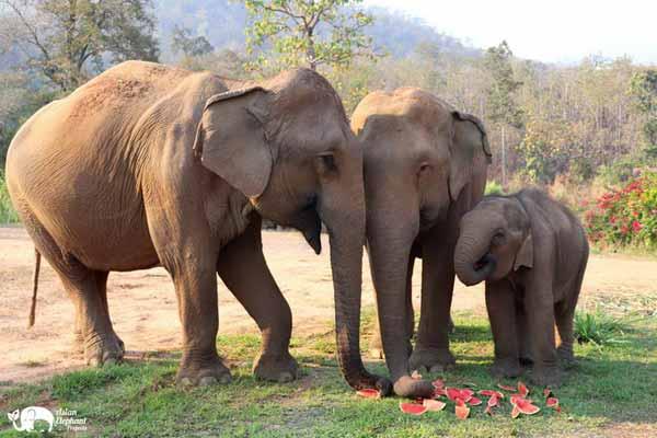 Elephant_Food_AsianElephantProjects_04