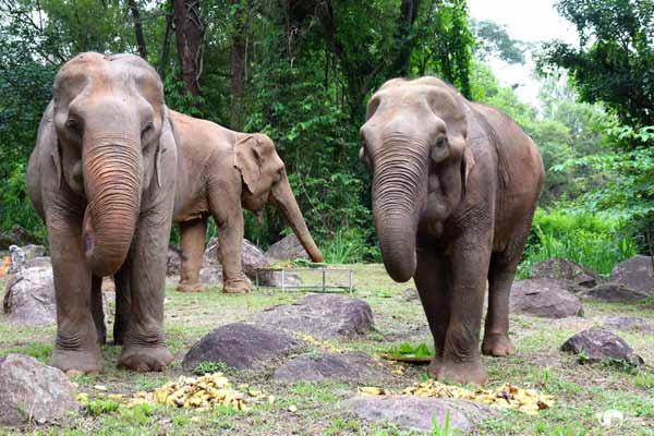 Elephant_Food_AsianElephantProjects_06