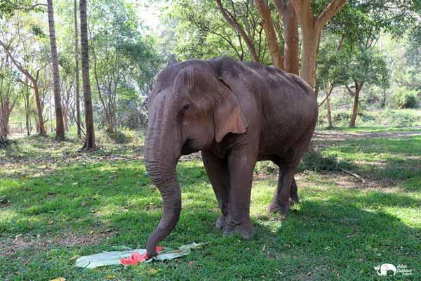 Elephant_Food_AsianElephantProjects_12