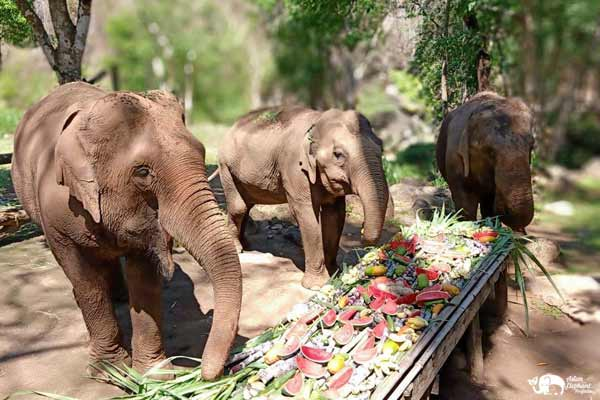 Elephant_Food_AsianElephantProjects_14