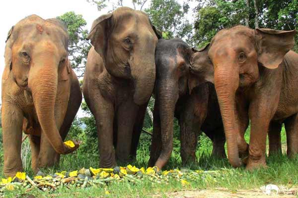 Elephant_Food_AsianElephantProjects_16