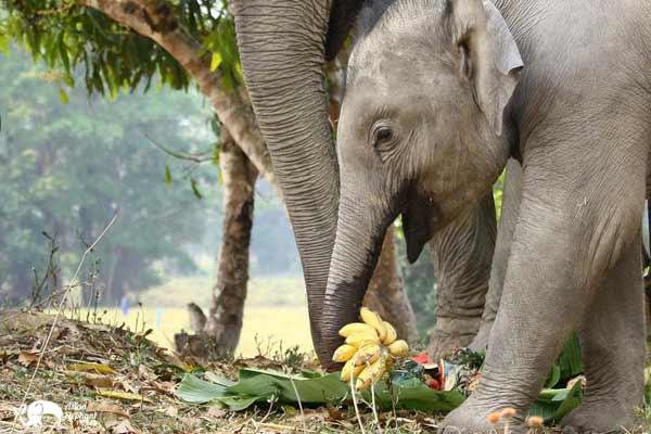 Elephant_Food_AsianElephantProjects_18