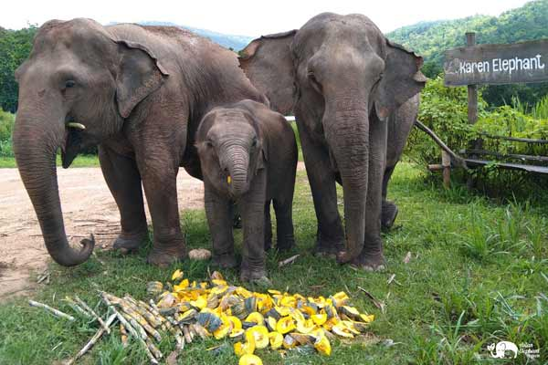 Elephant_Food_AsianElephantProjects_20
