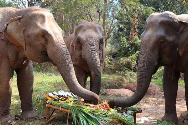 Elephant_Food_AsianElephantProjects_22