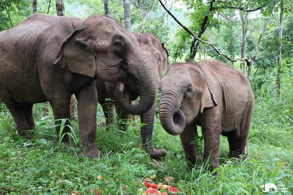 Elephant_Food_AsianElephantProjects_24
