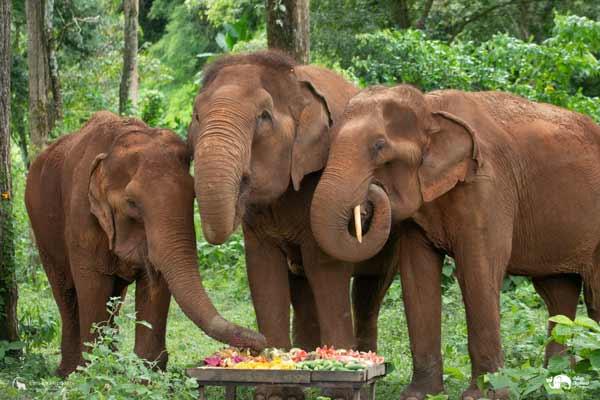 Elephant_Food_AsianElephantProjects_26