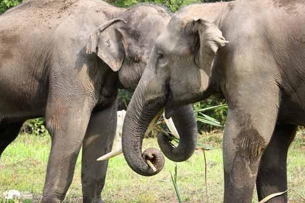 Elephant_Food_AsianElephantProjects_28