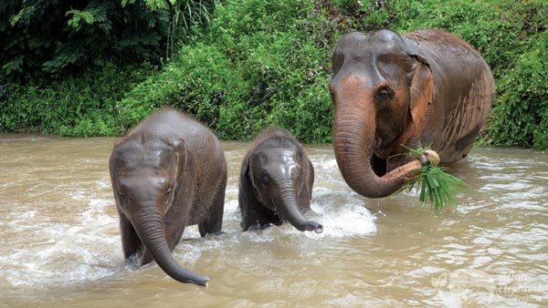 Elephant_Freedom