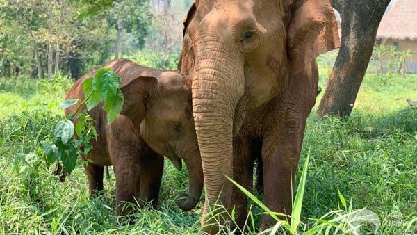 Elephant_Heaven_5
