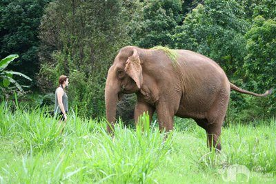 observing elephant at elephant highlands sanctuary chiang mai
