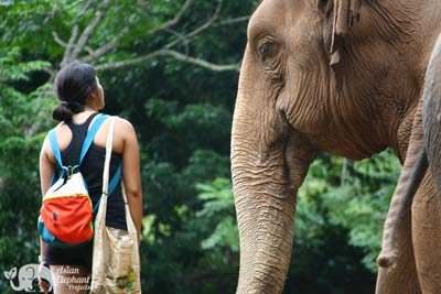 Elephant Highlands Elephany Sanctuary Asian Elephant Projects